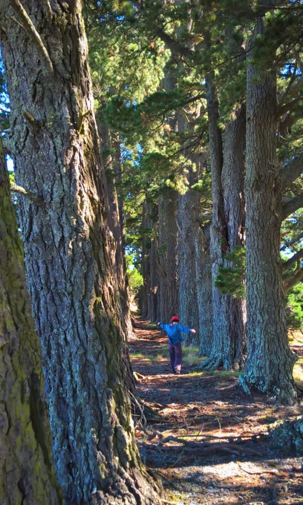 Coralie Saramago au milieu des arbres